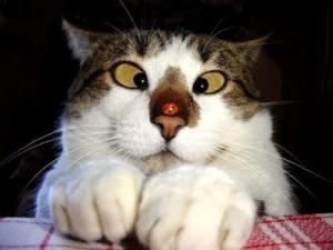 cross-eyed-cat2